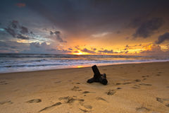 Beautiful Tropical Beach In Sri Lanka stock images
