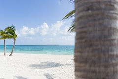 Beautiful Tropical Beach. A beautiful beach with sunny skies and a palm tree in the foreground Stock Image