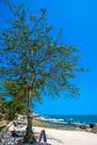 Beautiful tropical beach with trees and sunbeds Royalty Free Stock Photography