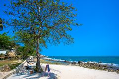 Beautiful tropical beach with trees and sunbeds Stock Photos