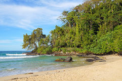 Beautiful tropical beach and vegetation Royalty Free Stock Image