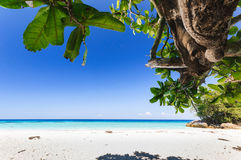 Beautiful tropical beach, white sand,  blue sky background and L. Eaf Tree Foreground. Seascape or Landscape at similan island, andaman sea, pacific ocean Royalty Free Stock Images