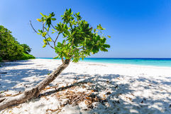 Beautiful tropical beach, white sand and blue sky background. Seascape or Landscape at similan island, andaman sea, pacific ocean Stock Photography