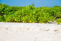 Beautiful tropical beach with white sand, bushes Royalty Free Stock Photography