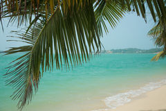 Beautiful tropical beach with white sand Royalty Free Stock Photo