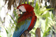 Beautiful tropical bird Royalty Free Stock Image