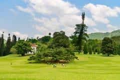 Beautiful tropical botanical garden Royalty Free Stock Photo