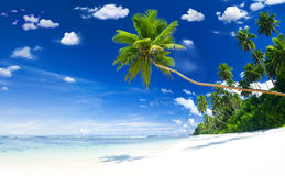 Beautiful Tropical Brach with Blue Sky Stock Images