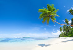 Beautiful Tropical Brach with Blue Sky Stock Photos