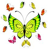 Beautiful tropical butterflies Stock Photo