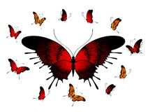 beautiful tropical butterflies Stock Images