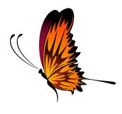 Beautiful tropical butterfly Royalty Free Stock Photo