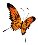 Beautiful tropical butterfly Royalty Free Stock Images