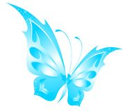 Beautiful tropical butterfly Royalty Free Stock Photography
