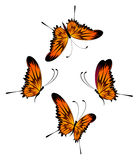 Beautiful tropical butterfly Royalty Free Stock Image