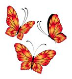 Beautiful tropical butterfly Stock Photos
