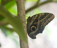 Beautiful tropical butterfly on a branch Stock Photos
