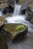Beautiful tropical cascaded river flowing through Royalty Free Stock Images