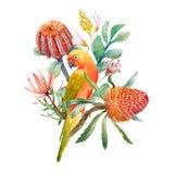 Watercolor tropical parrots composition vector illustration