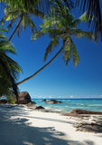 Beautiful tropical crystal clear sea with sandy beach and coconut palm tree Stock Photos