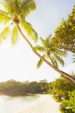 Beautiful tropical day with palm trees at beach Royalty Free Stock Images