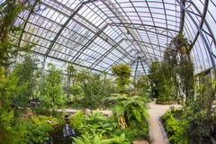 Beautiful tropical  exhibition in Palmengarten in Frankfurt Royalty Free Stock Photography