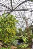 Beautiful tropical  exhibition in Palmengarten in Frankfurt Stock Images