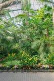 Beautiful tropical exhibition in Palmengarten in Frankfurt. Royalty Free Stock Images