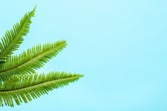 Beautiful tropical Fern leaves on color background. Top view Royalty Free Stock Photography