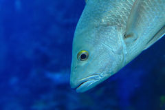 Beautiful tropical fish closeup Stock Photo