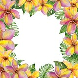 Beautiful tropical floral border made of plumeria flowers and exotic leaves. Square frame with white background for a text. Watercolor painting. Hand painted stock illustration