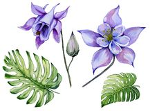 Beautiful tropical floral set blue and purple aquilegia, bud and monstera leaves. Colorful columbine flower and exotic leaves. Beautiful tropical floral set royalty free illustration