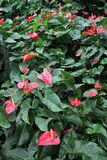 Beautiful tropical flower stock image