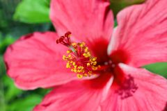 Beautiful tropical flower outdoors, Stock Photography
