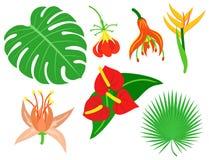 Beautiful tropical flower set design summer plants colorful decoration nature design floral drawing leaf blossom vector Stock Photo