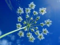 Beautiful Tropical Flower Stock Photo