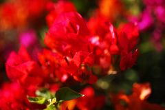 Beautiful tropical flowers Stock Photography