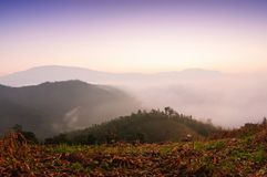 Beautiful tropical forest mist in thailand. Royalty Free Stock Image