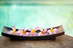 Beautiful tropical frangipani flower Stock Photography