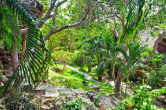 Beautiful tropical garden Royalty Free Stock Images