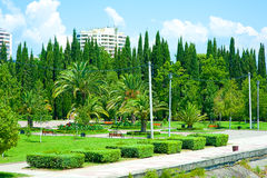 Beautiful tropical garden Stock Photos