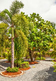 Beautiful tropical garden Stock Image