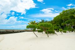 Beautiful tropical garden. On the sandy shores of the Indian Ocean Royalty Free Stock Photography