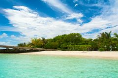 Beautiful tropical garden. On the sandy shores of the Indian Ocean Stock Photo