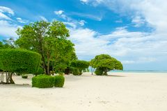 Beautiful tropical garden. On the sandy shores of the Indian Ocean Stock Images