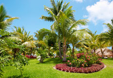 Beautiful tropical garden. Beautiful tropical garden at caribbean luxury resort Royalty Free Stock Images