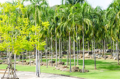 Beautiful tropical garden design in Thailand Stock Images