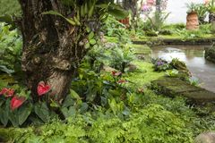 Beautiful tropical garden / Landscaping with tropical plants. Beautiful tropical garden , Landscaping with tropical plants Stock Photography