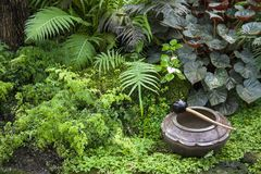 Beautiful tropical garden / Landscaping with tropical plants Royalty Free Stock Photo