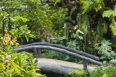 Beautiful tropical garden / Landscaping with tropical plants. Beautiful tropical garden , Landscaping with tropical plants Royalty Free Stock Photography